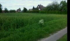 Bild: Holtland - Großes Baugrundstück direkt am Ortsrand von Holtland!