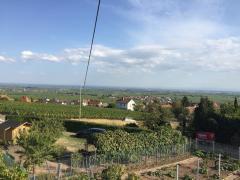 Bild: Weyher in der Pfalz - Freistehendes Einfamilienhaus mit wunderschönem Blick über die ganze Rheinebene in Weyher